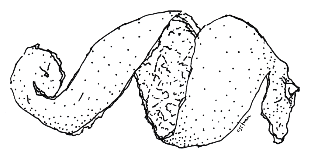illustration of orange peel spiral