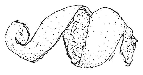illustration of orange peel spiral